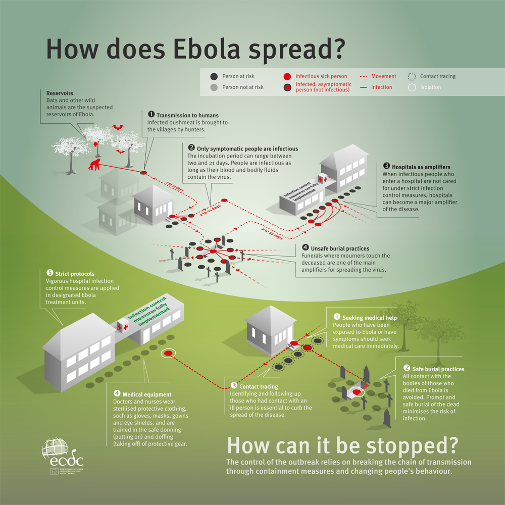 ebola infection essay Webmd explains the latest info on the rare but deadly disease ebola, including how it's spread, symptoms, causes, treatment, and prevention.
