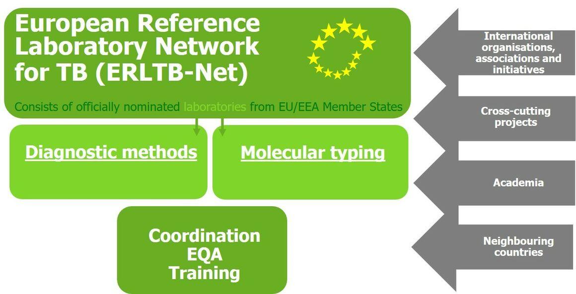 ERLTB-Net structure