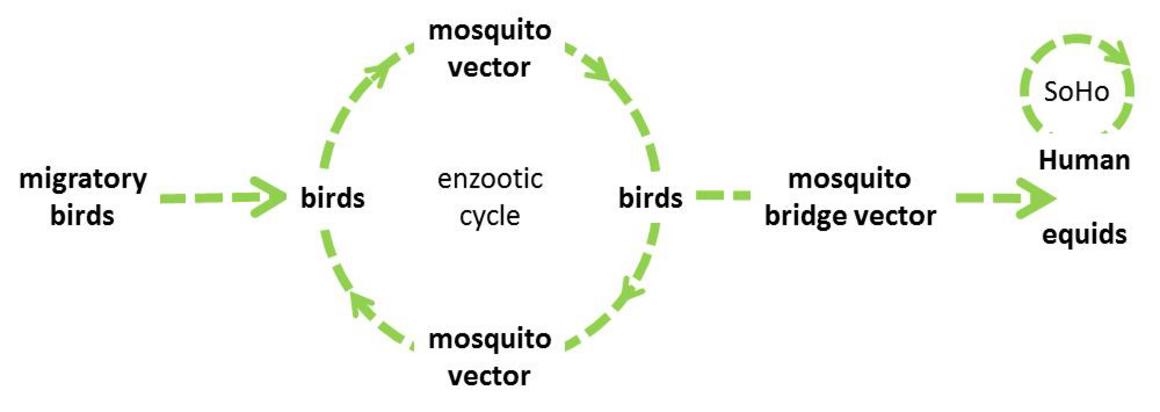 Factsheet about West Nile virus infection