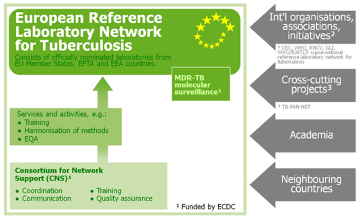 Organisational structure of the The European Reference Laboratory Network for TB